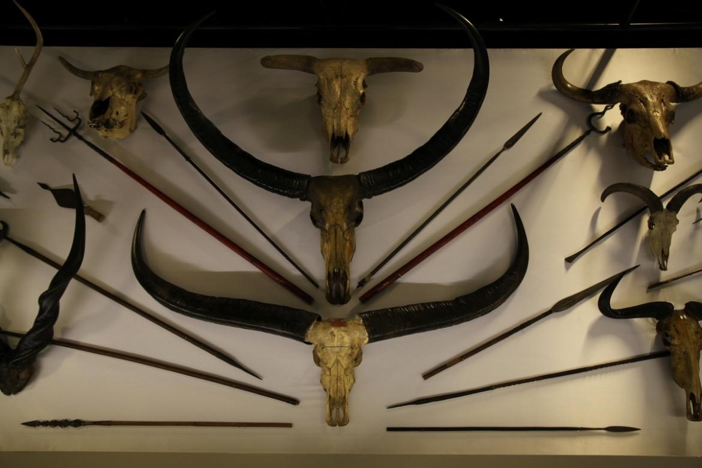 musée-confluences-lyon